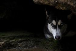 A Dog Hides in Georgia