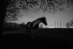 Our Horse Visits at Night