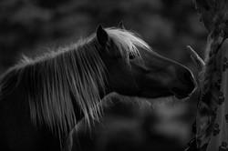 Horse and Tina