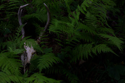 Ferns and Bone