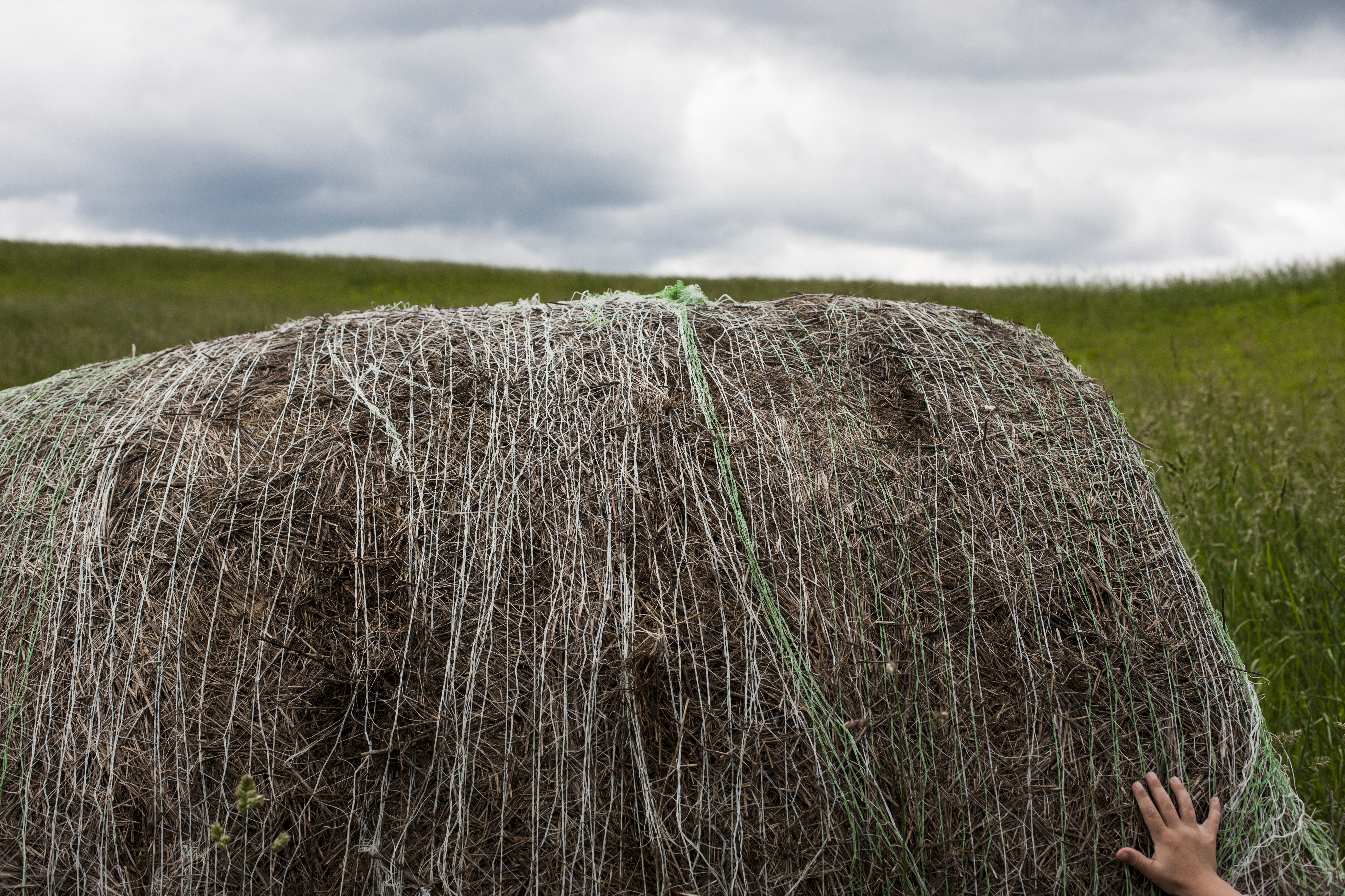 Hand on a Hay Bale