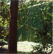 courtyard 7.jpg