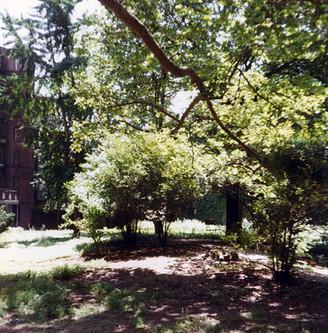 courtyard 9.jpg