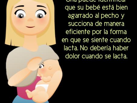 Asegurando un buen agarre del bebé al pecho