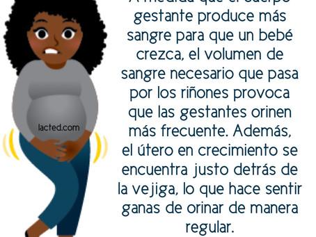 Las ganas de orinar con más frecuencia dan durante todo el embarazo