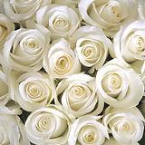 WHITE ROSES BACKGROUND.jpg