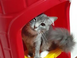 4 motivos para os seu gato amar lugares altos