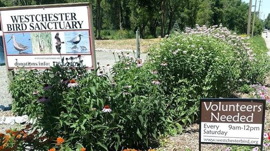 WMBS volunteers needed sign summer.jpg