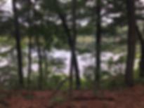 Pickerel_Pond_IMG_4651.webp