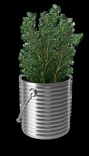 organic gardening for herbs