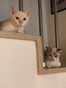 Teo y Clara