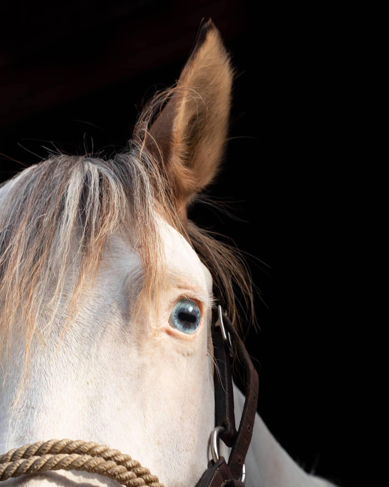 Animals Teach Us - Walk with Horses