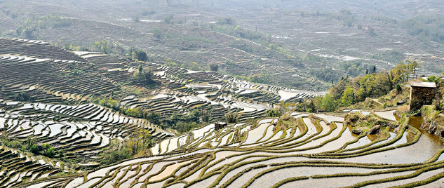 05. Rice Terraces of the Hani people, Yua