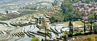 07. Rice Terraces of the Hani people, Yua