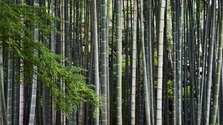 35. Bamboo grove.jpg