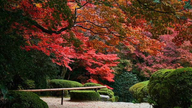 06. Garden of Shisen-do Temple.jpg