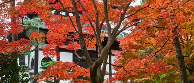 11. Garden of Tofuku-ji Temple.jpg