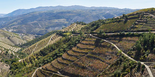 07. Wine terraces at the Douro.jpg