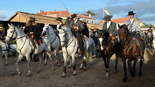 07. Lusitano Horse Festival.jpg
