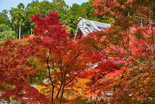 03. Garden of Enko-ji Temple.jpg