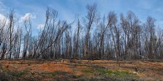 29. After the fire, Serra do Açor.jpg