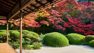 05. Garden of Shisen-do Temple.jpg