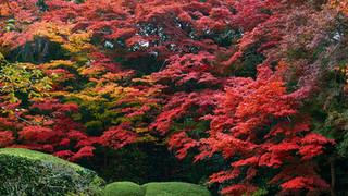 07. Garden of Shisen-do Temple.jpg