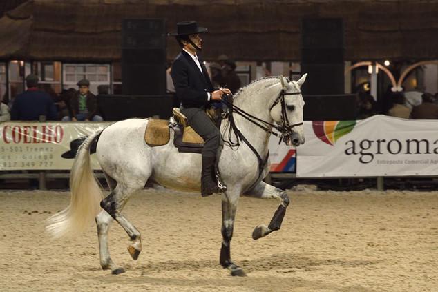 12. Lusitano Horse Festival.jpg