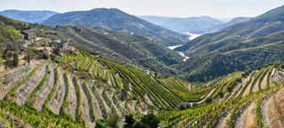 05. Wine terraces at the Douro.jpg