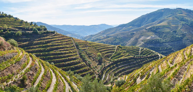 06. Wine terraces at the Douro.jpg