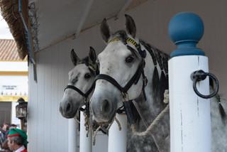 03. Lusitano Horse Festival.jpg