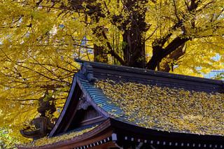20. Autumn at Myogon-ji Temple, Akasaka.