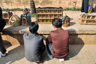38. Displaying Mwamei birds, Jianshui, Y