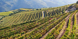 08. Wine terraces at the Douro.jpg