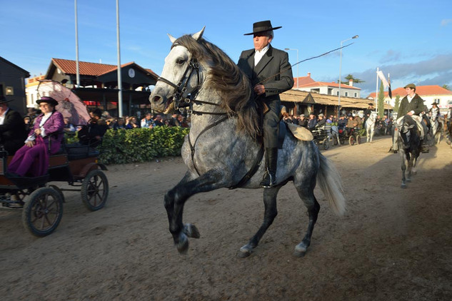 08. Lusitano Horse Festival.jpg