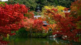 13. Eikan-do, Zenrin-ji.jpg