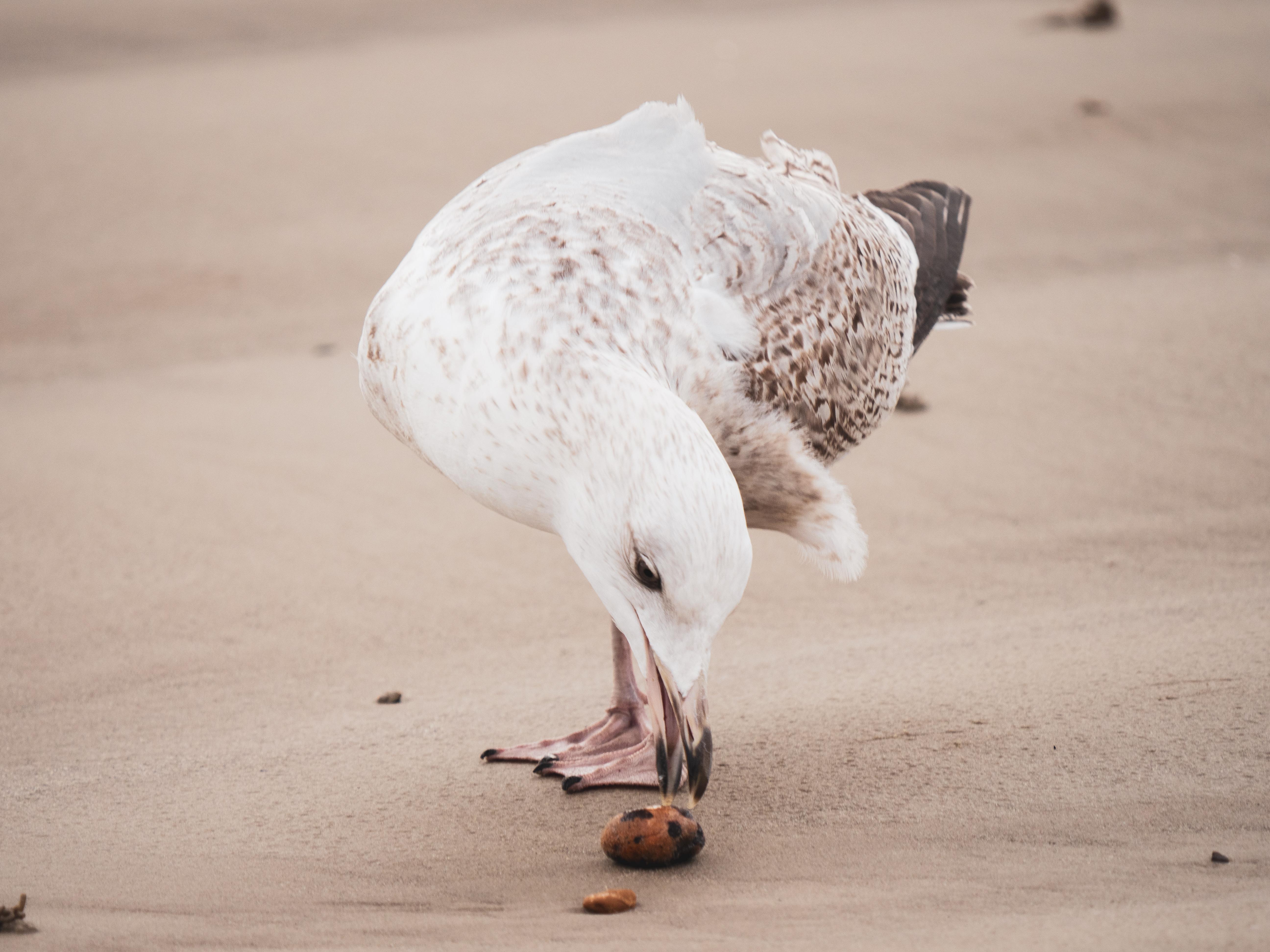 Gulls 10