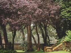 Whitburn Hall Garden 10