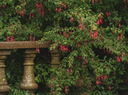 Whitburn Hall Garden 4