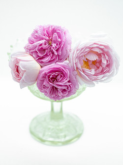 A Bunch Of English Roses 1