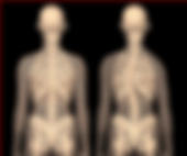 scoliosis2_edited.png