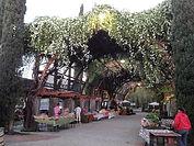 The Vineyard Farmers Market, None Plus 5, Local Love, Fresno California, Family Fun