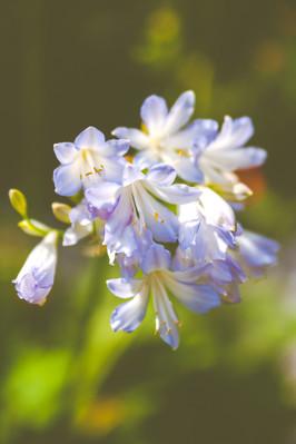 Garden Flowers-