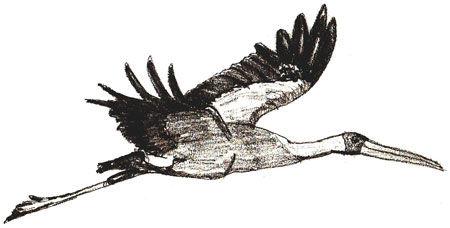 stork-6.jpg