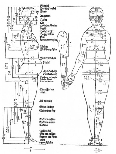 Studies-on-the-proportions-of-the-female