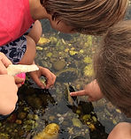 marine biology east hampton