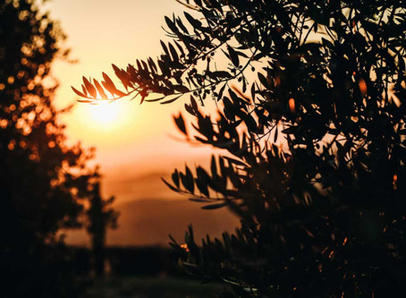 Ruta aceite de oliva en Italia: tips y consejos para degustar en tu viaje