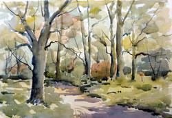 Woodlands at Albury Heath