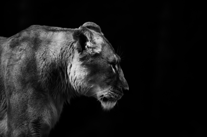 Amey Vartak | Wellington Zoo