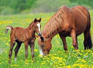 Horse Feeding Myths & Misconceptions